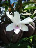 Orchid blossom. Ingarden Stock Photo