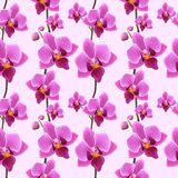 Orchid blossom seamless pattern Royalty Free Stock Image