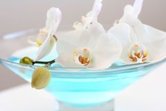 Orchid in blue vase. Orchid close up over blue water in glass vase Stock Photo