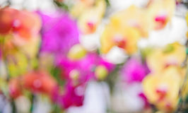 Orchid blur for background. Royalty Free Stock Photography