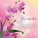 Orchid. Bokeh pink background with orchids, vector illustration Stock Photography