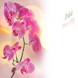 Orchid border Royalty Free Stock Images