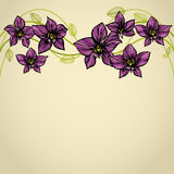 Orchid Border Stock Photography