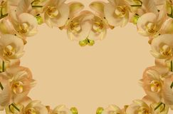 Orchid border for invitations etc Stock Image