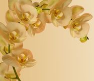 Orchid border for invitations etc Stock Photos