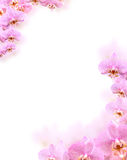 Orchid Border. Border made from beautiful pink orchid flowers Royalty Free Stock Images
