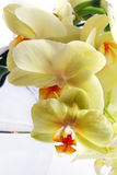 Orchid bouquet Royalty Free Stock Photography