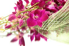Orchid bouquet. Royalty Free Stock Images