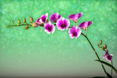 Orchid bouquet with a beautiful bokeh. Royalty Free Stock Photos