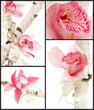 Orchid bouquet collage Royalty Free Stock Photos