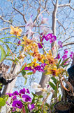 Orchid bouquets under the big tree Stock Images