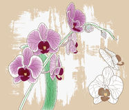 Orchid branch Stock Images