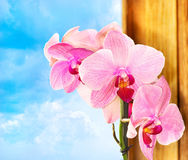 Orchid branch Royalty Free Stock Images