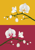 Orchid branch. Budding white orchids on red and yellow backgrounds Stock Photos