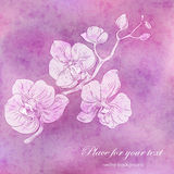Orchid branch design with copy-space Stock Photo