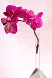 Orchid branch inside glass vase Stock Image