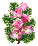 Orchid branch with pink blooms and pine branch Stock Image