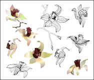Orchid branch vector Stock Photos
