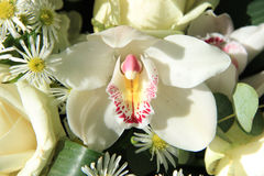 Orchid in bridal bouquet Stock Image