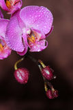 Orchid on brown Stock Photos
