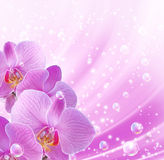 Orchid and bubbles Stock Photo
