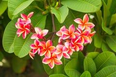 Orchid burgundy. Green bush. Summer. Light royalty free stock image