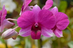 Orchid. In Buritis Park in Goiania stock images