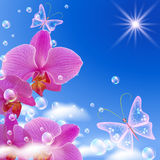 Orchid and butterflies Royalty Free Stock Photos