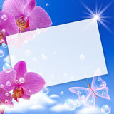 Orchid and butterflies Stock Photography