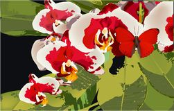 Orchid and Butterfly, vector floral exotic bloom royalty free illustration