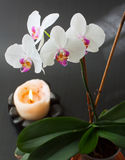 Orchid and candle Stock Photo