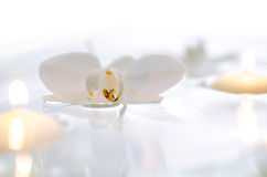 Orchid and candles floating on the water Royalty Free Stock Photography