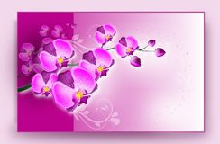 Orchid card Stock Images