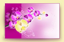 Orchid card Stock Photography