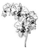 Orchid Cattleya stock illustrationer