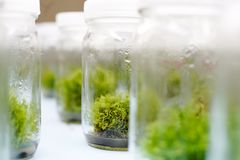 Orchid cell plant tissue culture Stock Photo