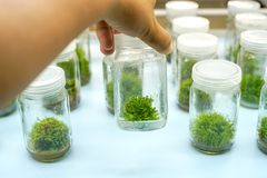 Orchid cell plant tissue culture. In the laboratory Stock Photography