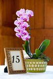 Orchid centerpiece Stock Images