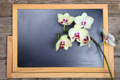 Orchid on the chalkboard . Royalty Free Stock Image