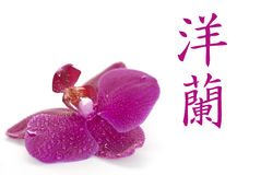 Orchid chinese Stock Image