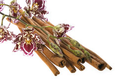 Orchid and cinnamon. Beauty orchid and cinnamon set against a plain background Stock Images