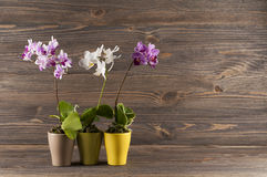 Orchid in clay pot over wooden background. Stock Photography
