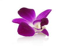 Orchid close-up Royalty Free Stock Images