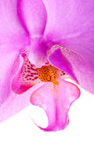Orchid close up 4 Stock Image