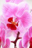 Orchid. Close-up of orchid, selective focus stock photos