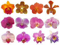 Orchid collection Royalty Free Stock Images