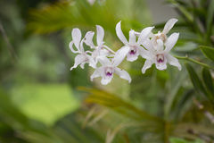 Orchid color white Stock Photos