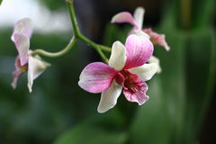 Orchid. Colorful orchid on blur background Stock Image
