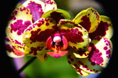 Orchid. Colors, background, holidays, rest, trip, tropics, yellow, green grass flower wallpaper floral beautiful spring garden plants Royalty Free Stock Photo