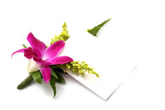 Orchid corsage with card. Isolated on white royalty free stock photos